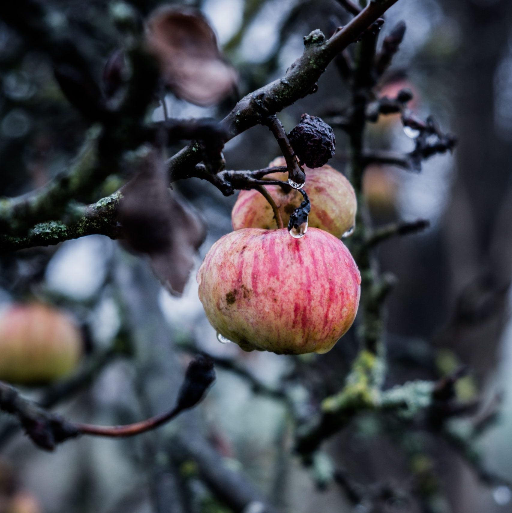 Winter pruning for fruit trees and bushes